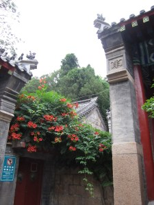 Laoshan Taoist temple with trumpet vine