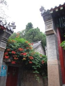 Laoshan Taoist temple with trumpet vine