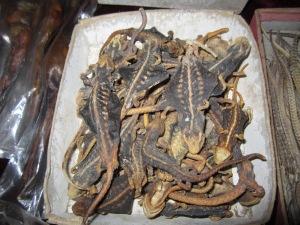 lao shan herbalist dried lizard