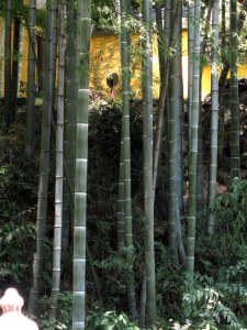 Lingyin Si bamboo forest